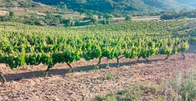 Imagen de unas viñas